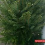 Weihnachtsbaum in Wiederitzsch entsorgen