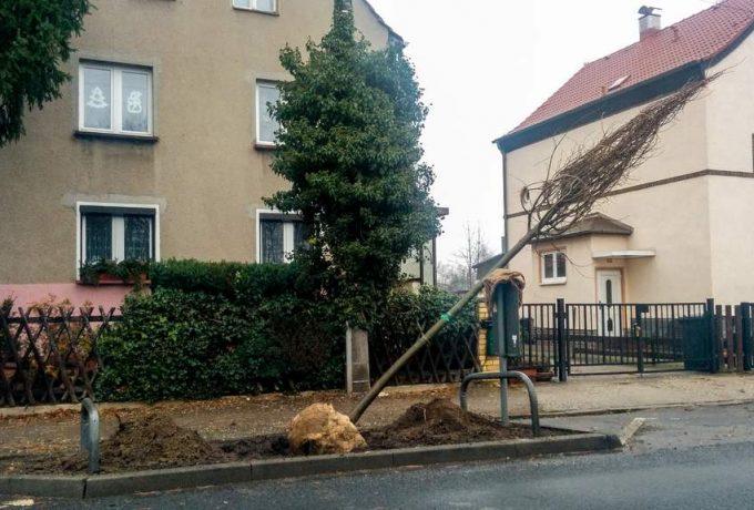 Neue Bäume Bahnhofsstraße Wiederitzsch