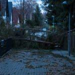 """Was das Sturmtief """"Friederike"""" in Wiederitzsch hinterlassen hat."""